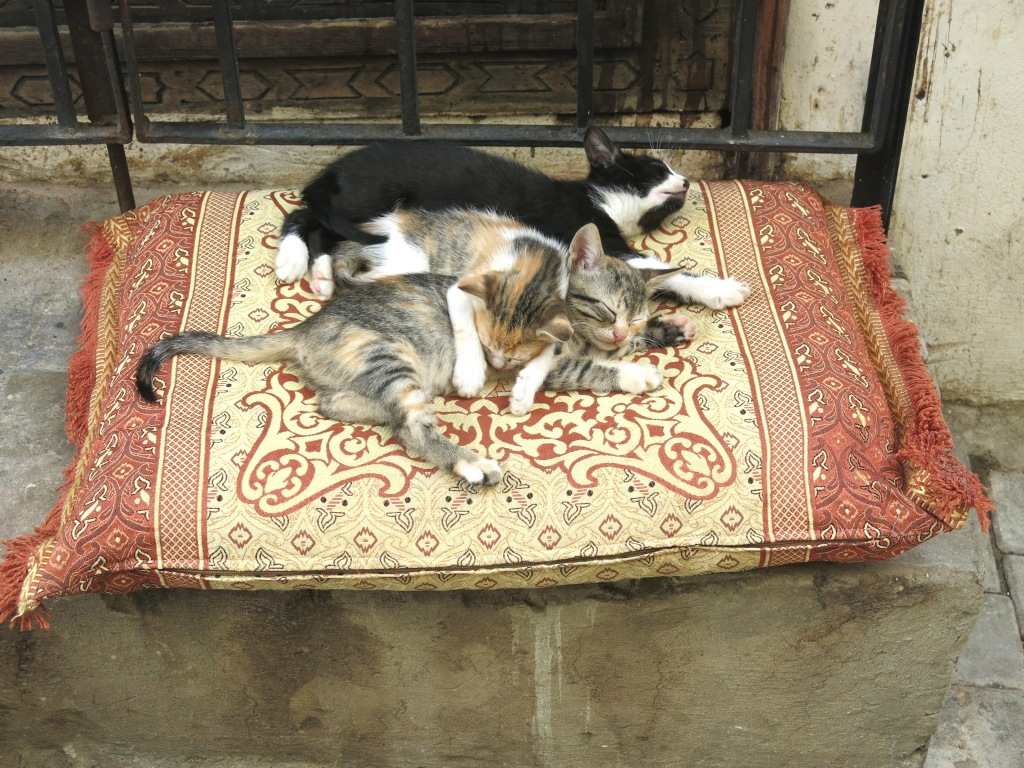 Pillow of Kittens, Tangier