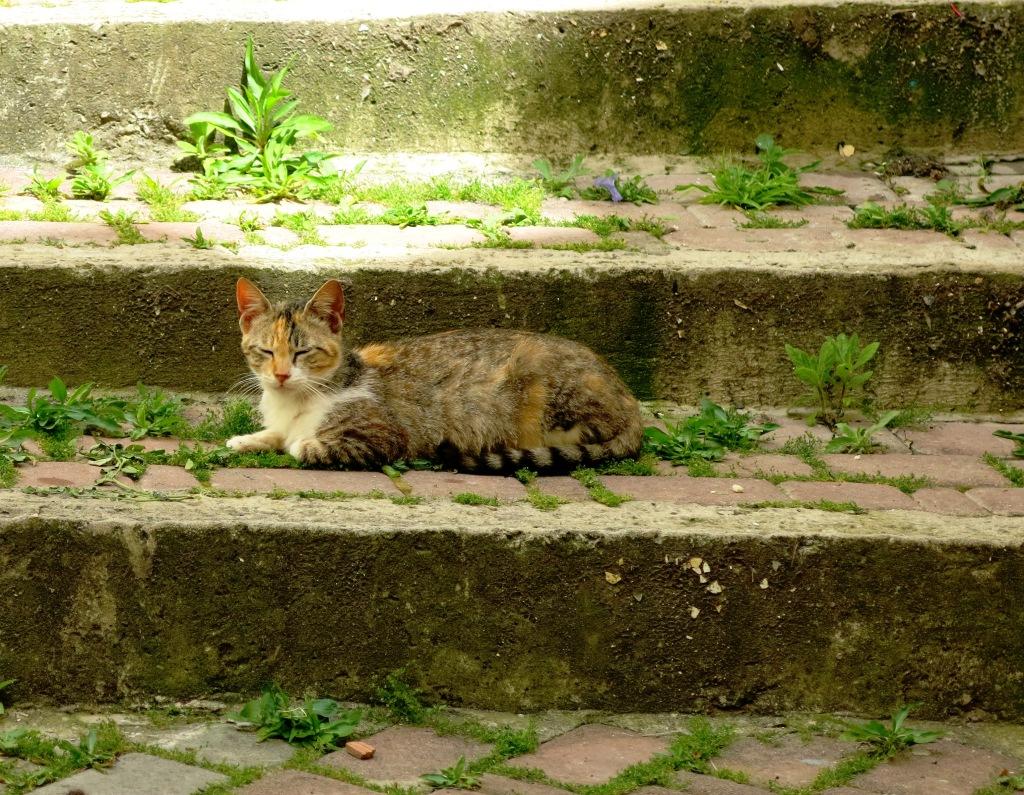 Cat, Tangier