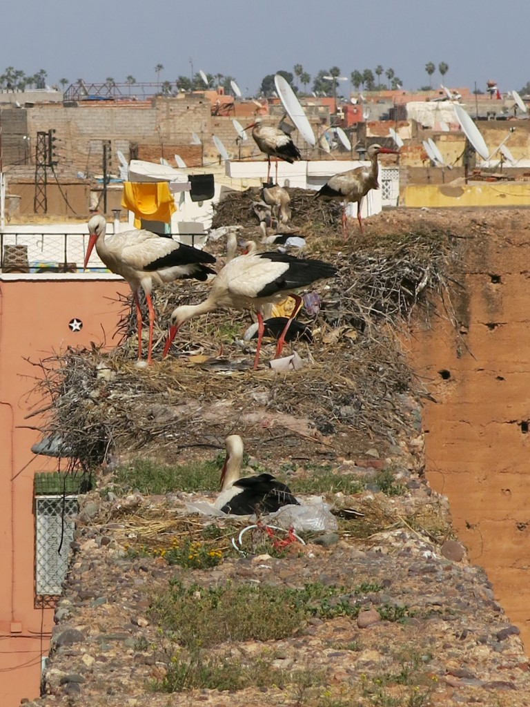 Storks at Bahia Palace