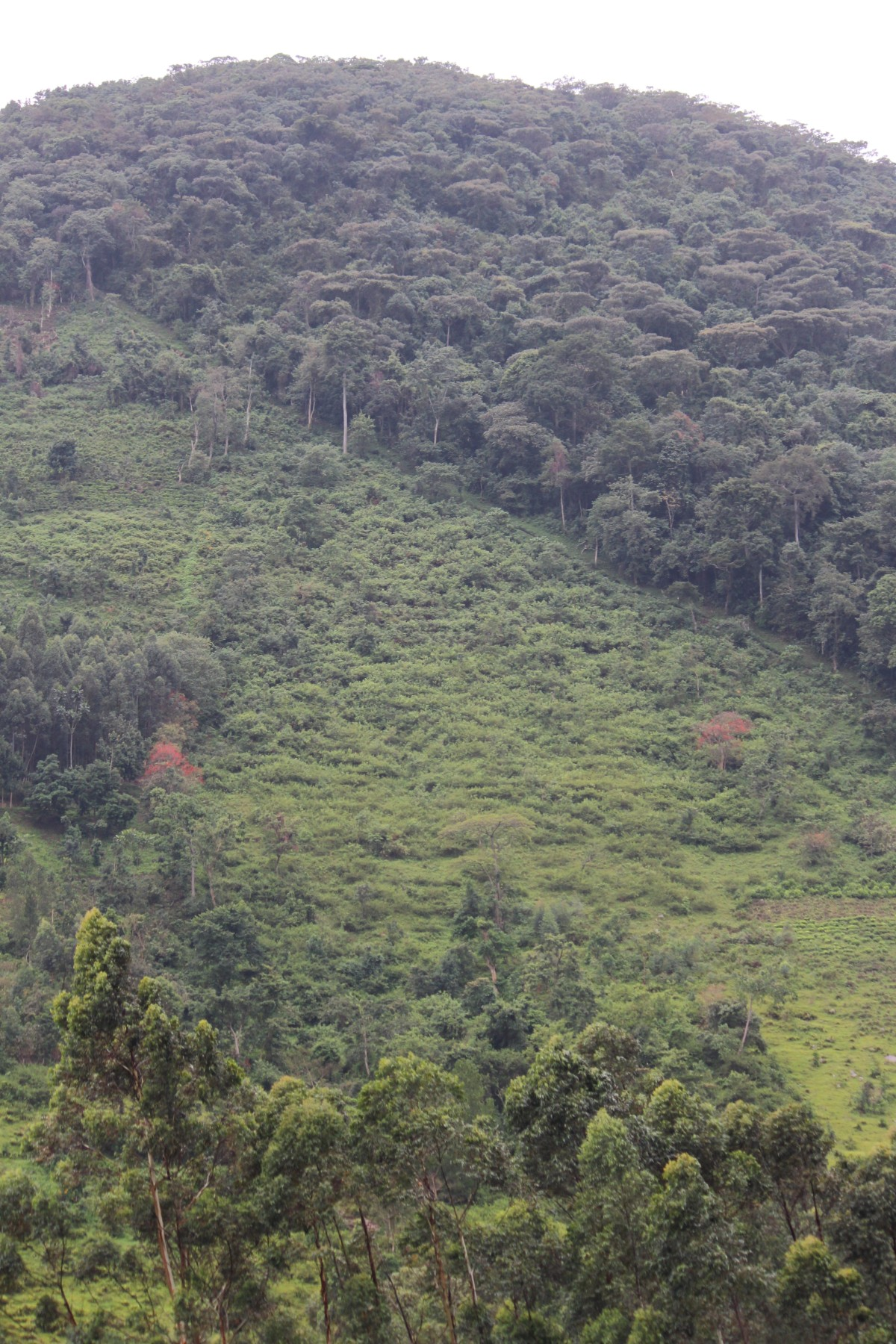 The Bwindi Impenetrable Forest ...
