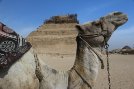 Camel and the Pyramid of Djoser