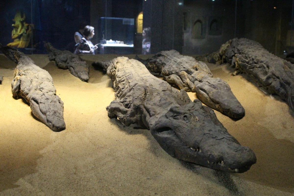 Kom Ombo, croc mummies