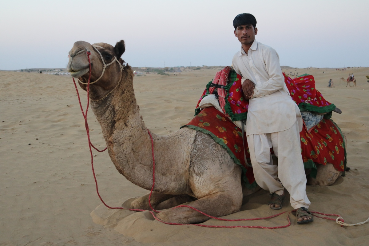 Camel and handler in Jaisalmer, India