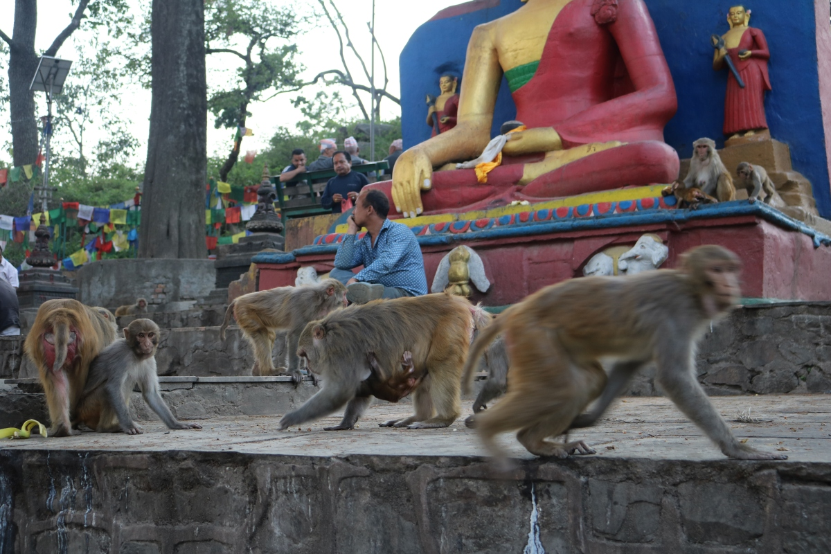 Monkeys on the move at Swayambhunath Stupa