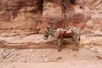 Donkey, Petra