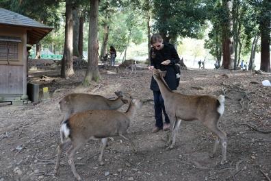 feeding deer, Nara