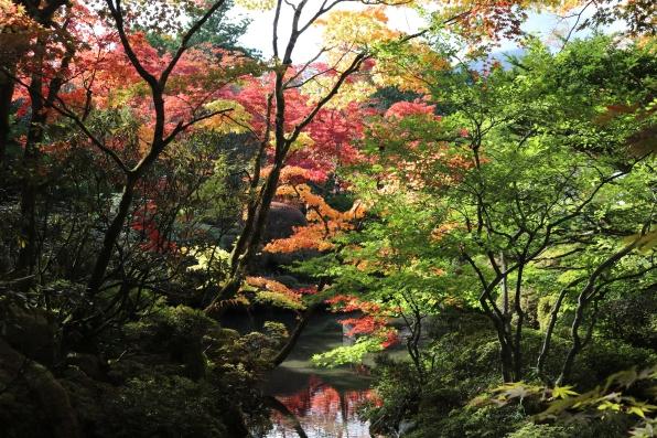garden, Nikko 2