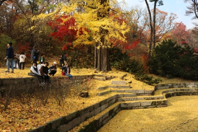 Huwon Secret Garden, Changdeokgung (7)