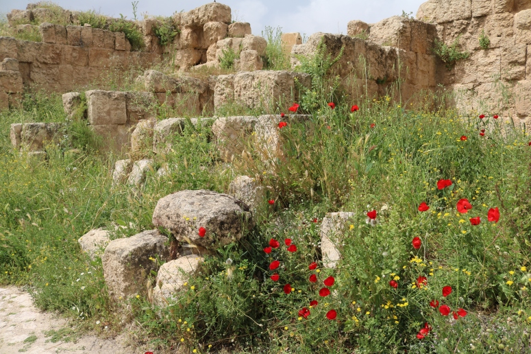poppies, Jerash